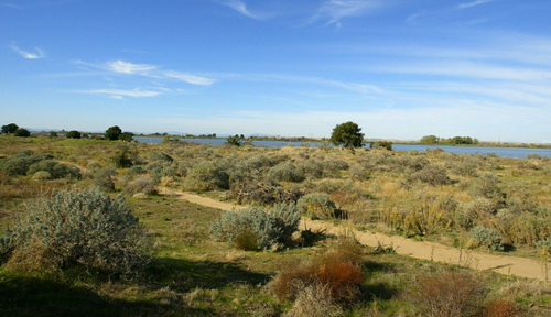 The San Joaquin River runs along the dunes of the Stamm unit of the Antioch Dunes National Wildlife Refuge on Thursday October 29, 2009 in Antioch, Calif. (Aric Crabb/Staff)